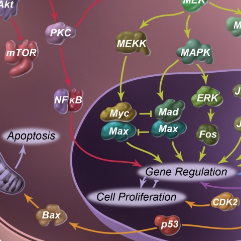 molecular pathways skin cancer